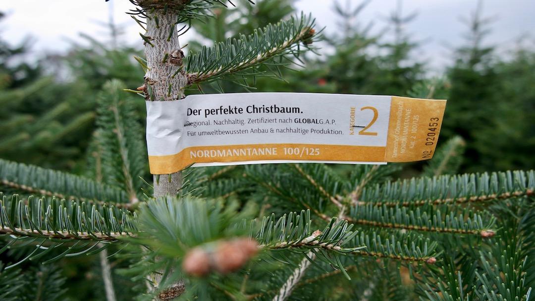 Christbaum Muenchen